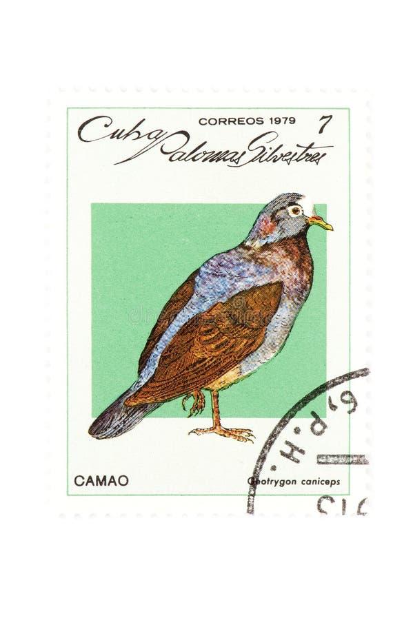 Close up do pássaro do selo de porte postal fotografia de stock