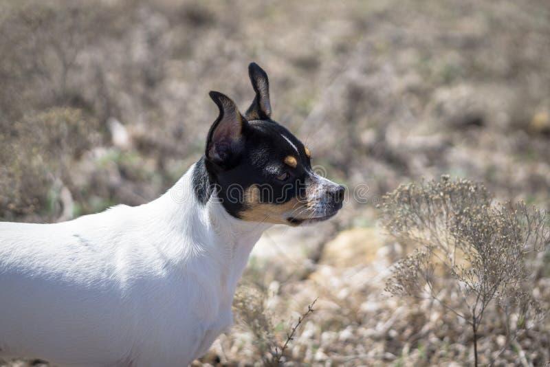 Close up do perfil do cachorrinho da exploração agrícola imagem de stock royalty free
