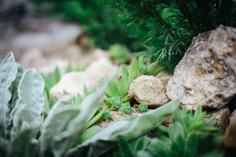 Close-up do projeto da paisagem fotos de stock