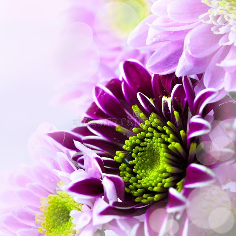 Close up do ramalhete da flor da mola imagem de stock royalty free