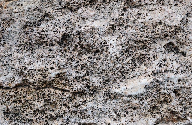 Close-up do sedimento coral petrificado imagem de stock royalty free