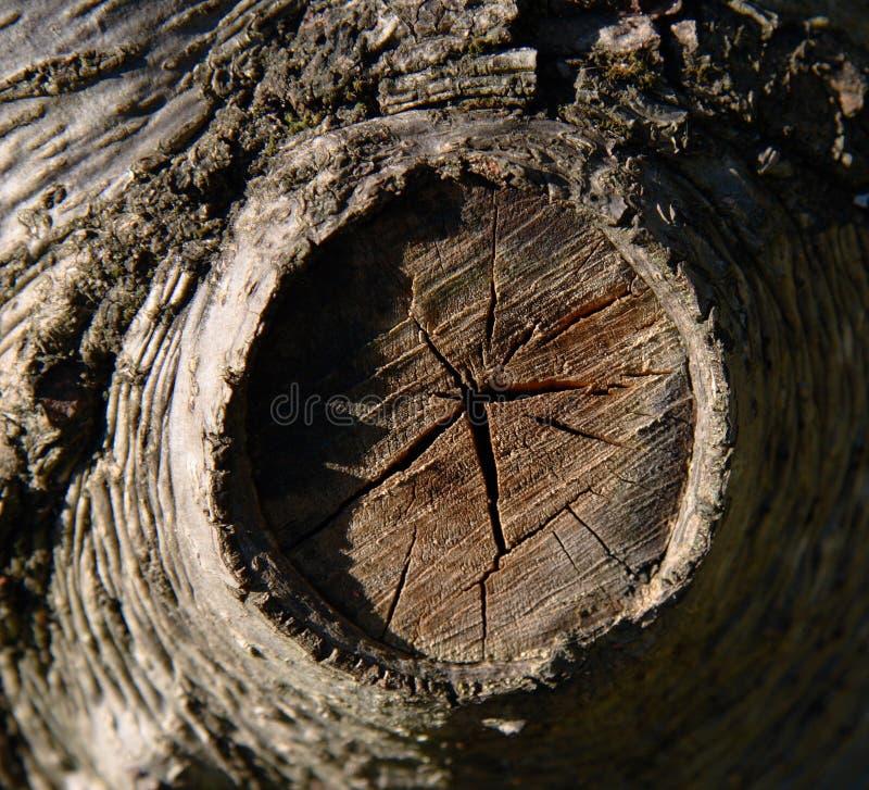 Close-up do tronco de árvore imagem de stock