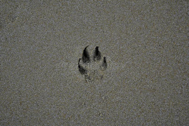 Dog footprints on the sand stock image