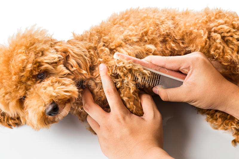 Close up of dog fur combing and de-tangling during grooming royalty free stock image