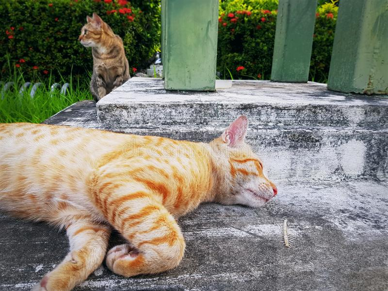 Domestic Cats Sleeping and Waiting to be Fed. Close-up Domestic Cats Sleeping and Waiting to be Fed royalty free stock images