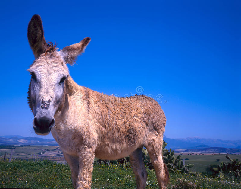 Close up of donkey stock photos