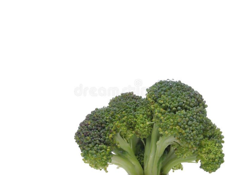 Close up dos bróculos que olha como uma árvore fotografia de stock