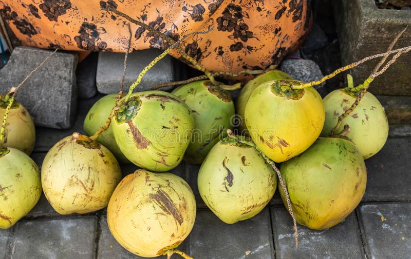 Close up dos cocos em Banjar Gelulung, Bali Indon?sia fotografia de stock royalty free