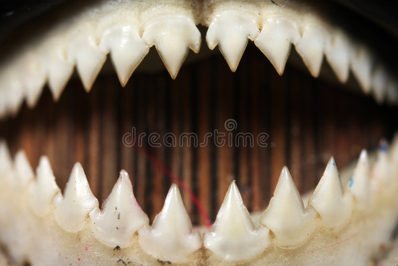 Close-up dos dentes do Piranha imagens de stock royalty free