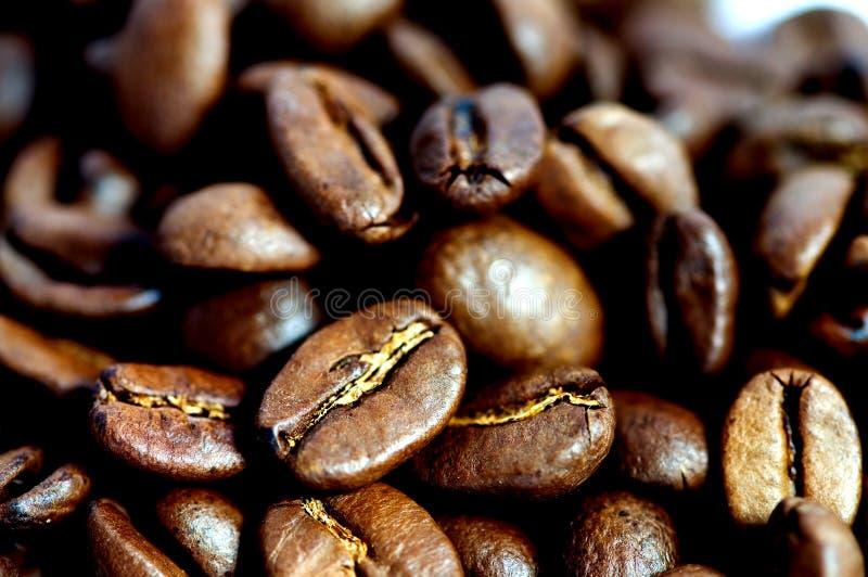 Close up dos feijões de café fotografia de stock