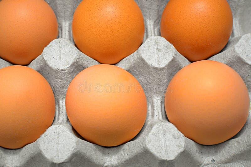 Close-up dos ovos com data de validade foto de stock royalty free