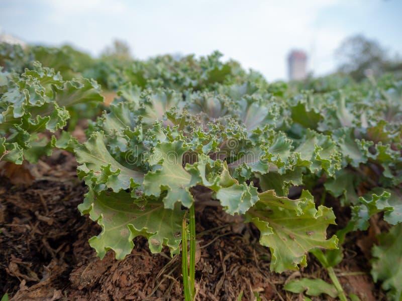 Close-up dos vegetais no lote exterior foto de stock royalty free