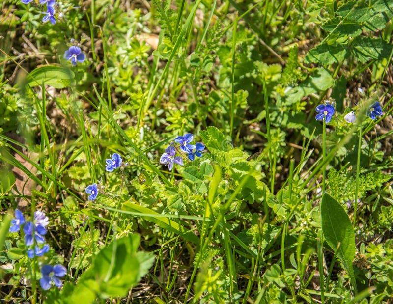 Close up dos Wildflowers Flores do prado Pitoresco poucas flores em um prado verde Flores do prado imagens de stock royalty free
