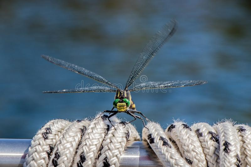 Close up of a dragonfly stock photos
