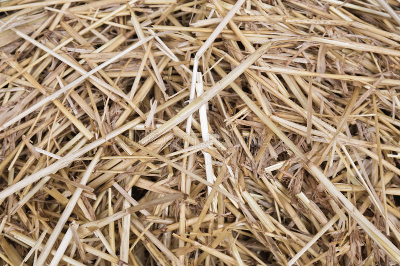 Close up of dried grass straw texture background stock image