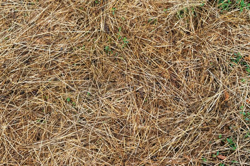 Close-up. dried grass in the Sun during the day. Close-up dried grass in the Sun during the day stock images