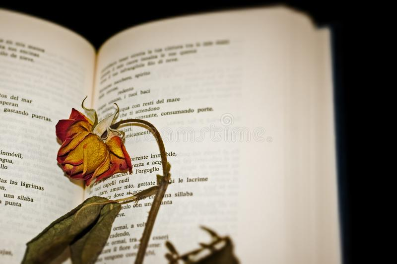 Download Close-up Of A Dried Rose On Open Book Pages Stock Image - Image: 5165813