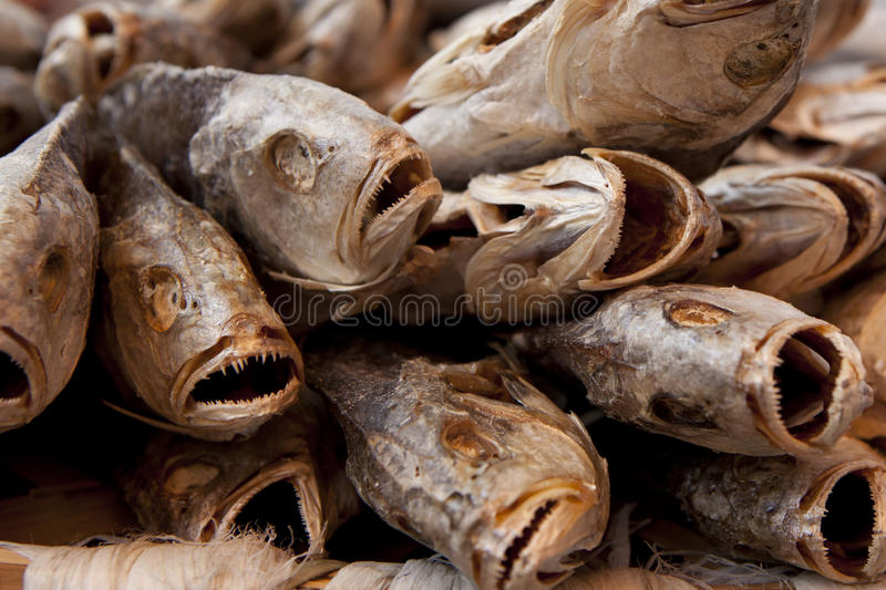 Close-up of dried salted fish royalty free stock photography