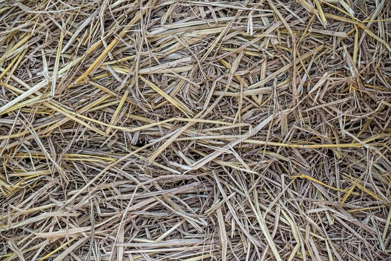 Close up dried straw texture for vintage background. image for background stock photo