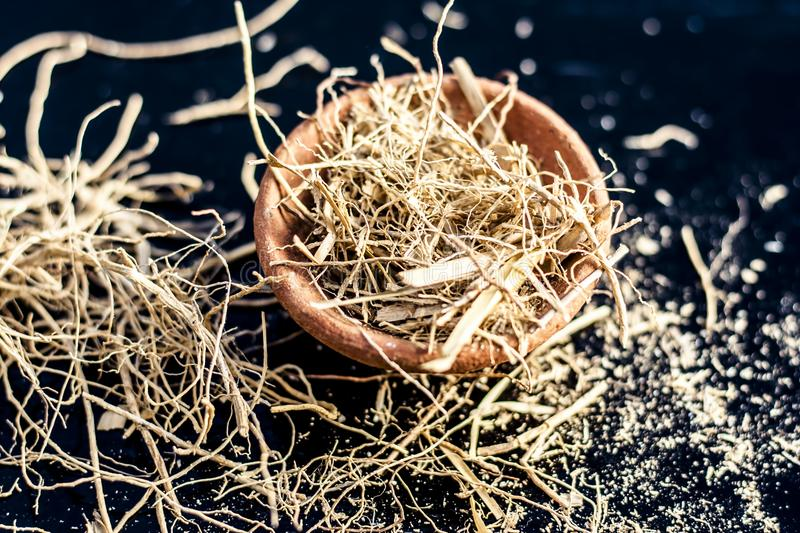Close up of dried vetiver grass or khur or Chrysopogon zizanioides grass in a clay bowl o wooden surface. Dried vetiver grass or khus or Chrysopogon zizanioides royalty free stock images