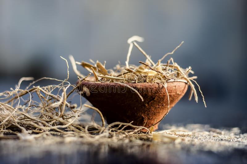 Close up of dried vetiver grass or khur or Chrysopogon zizanioides grass in a clay bowl o wooden surface. Dried vetiver grass or khus or Chrysopogon zizanioides stock images