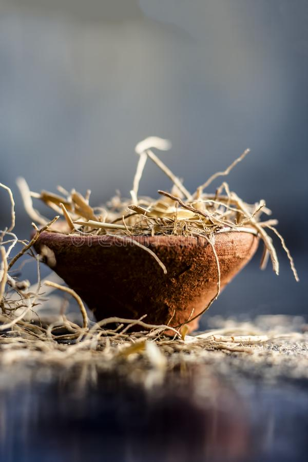 Close up of dried vetiver grass or khur or Chrysopogon zizanioides grass in a clay bowl o wooden surface. Dried vetiver grass or khus or Chrysopogon zizanioides stock image