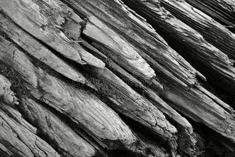 Close-up of driftwood royalty free stock images