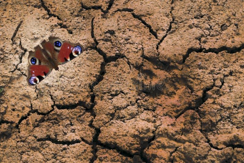 Close-up Droog land er is een vlinder in het centrum van de dierlijke weg stock fotografie