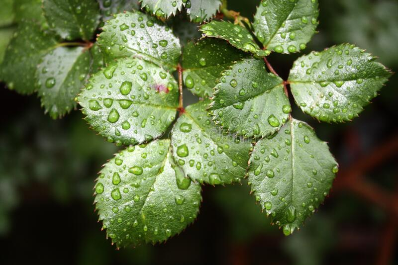 Close Up Of Droplets On Leaf Free Public Domain Cc0 Image