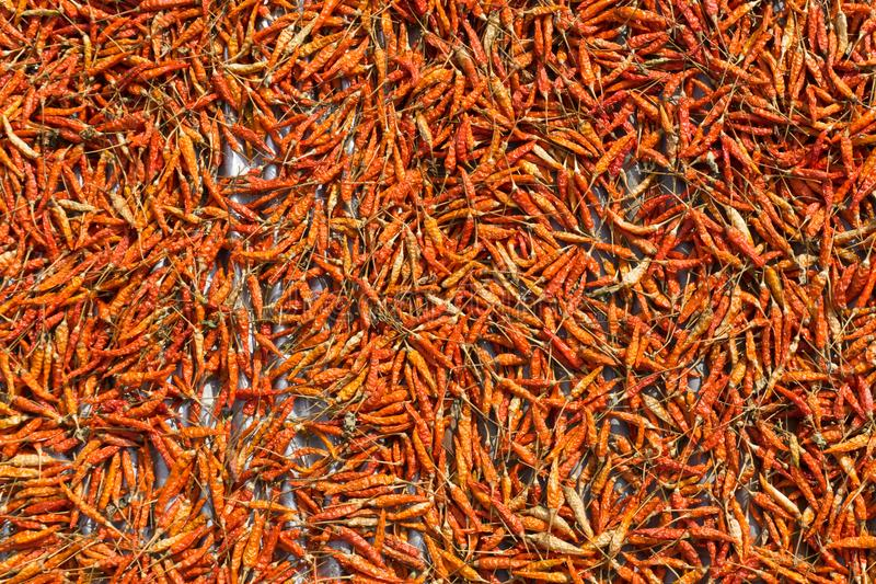 Close up of dry chilli peppers stock photo