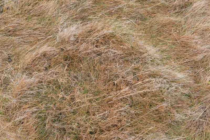Download Close-up of dry grass stock photo. Image of lawn, dried - 105037570