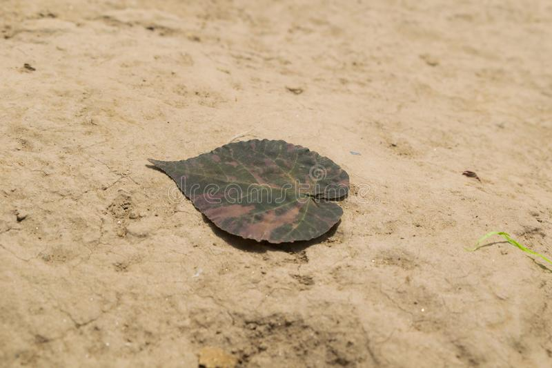 Close up of dry leaf on earth stock image