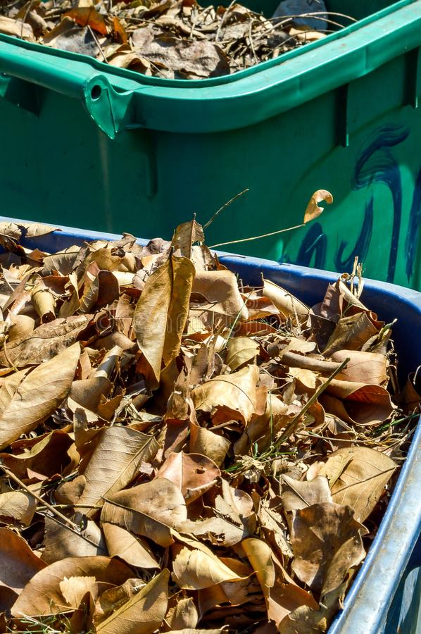 Dry leaves on plastic bin. Close up Dry leaves on plastic bin royalty free stock photo
