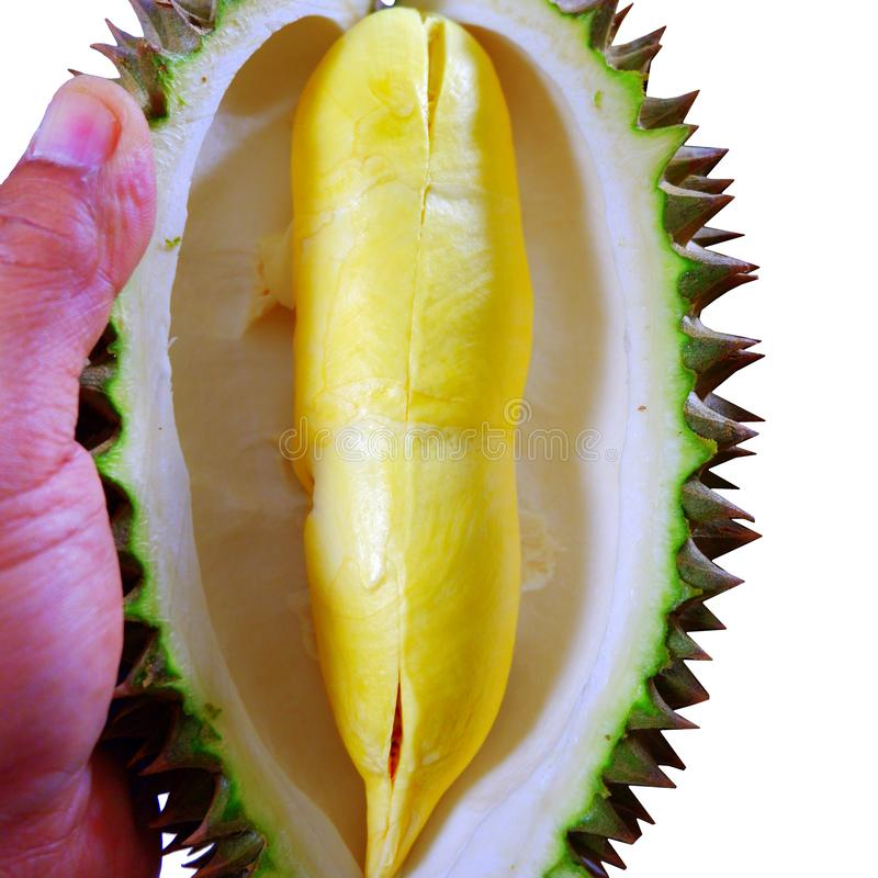 Close-up Durian Monthong isolate on white background. stock photos