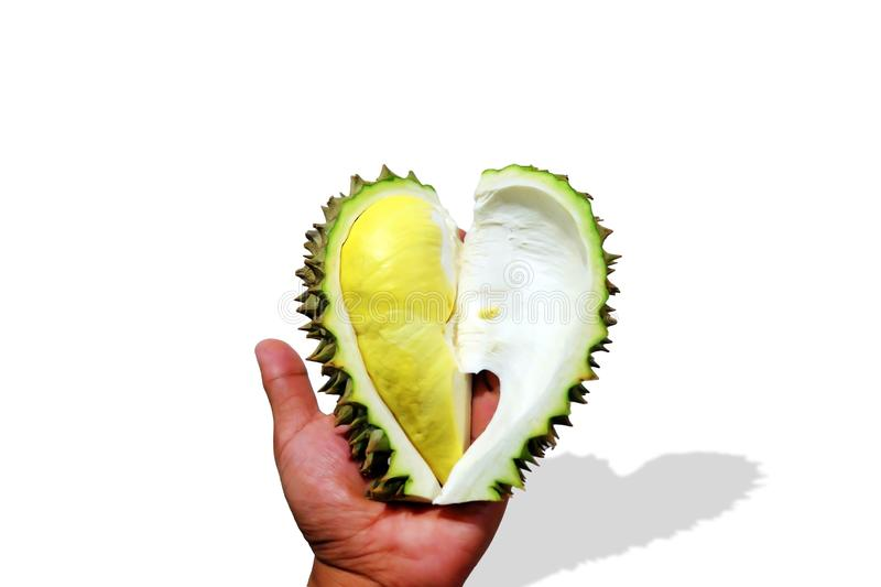 Close-up Durian Monthong in my hand. stock photo