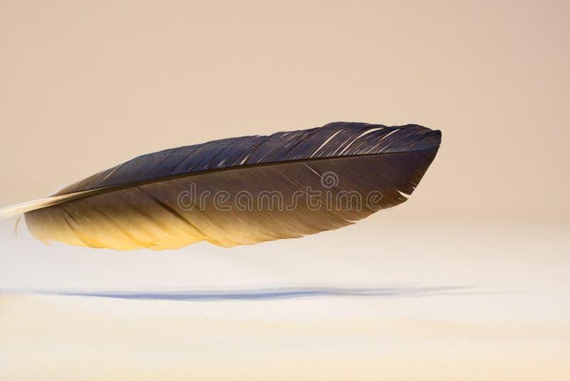 Close-up e detalhes de uma pena de pássaro imagens de stock