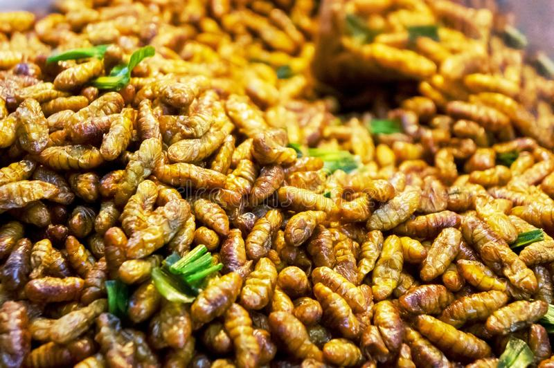 Edibles Silkworms. Close-up on eatables fried insects, in an asian market royalty free stock photos