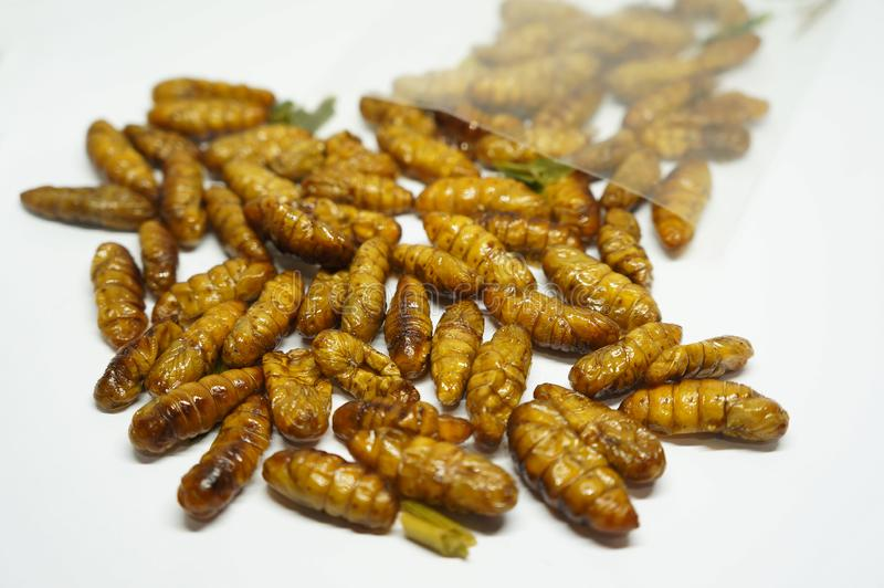 Close-up on edibles Silkworms. Comestibles insects out of a plastic bag, on a white background royalty free stock image