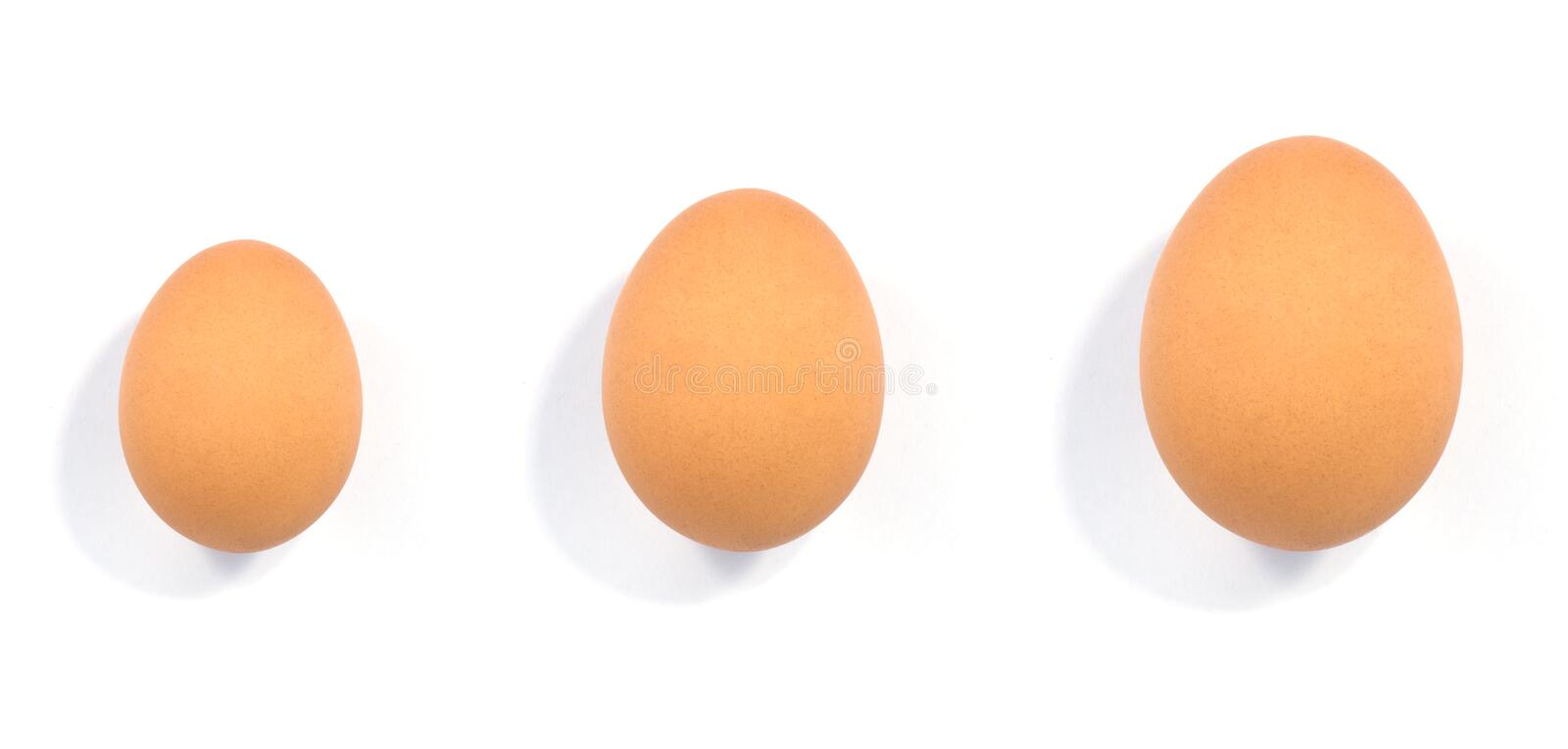 Download Close up of egg stock image. Image of merchandise, color - 39510683