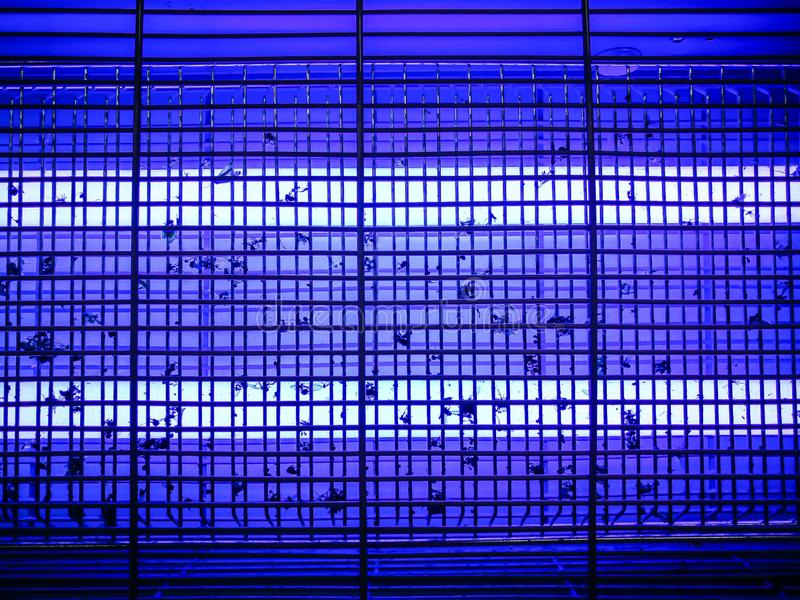 The Close up Electronic blue light insect killer. stock photo