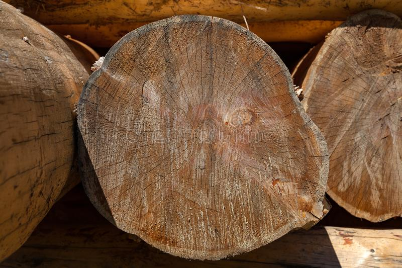 Close-up em um log de uma árvore sob a forma de uma madeira redonda com anéis Material de construção do log fotos de stock