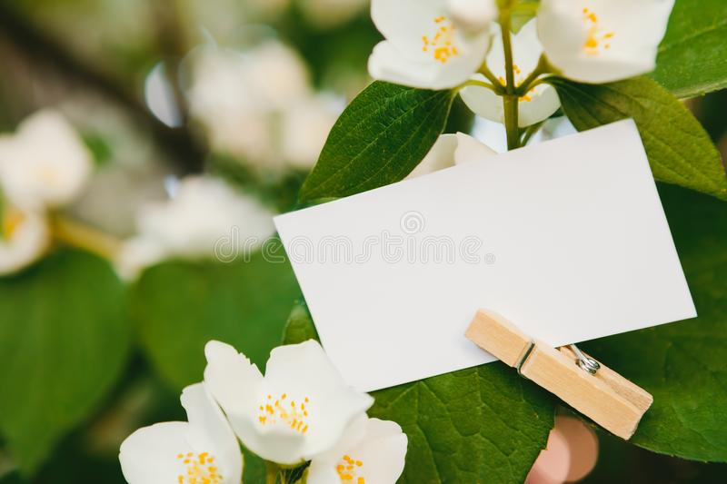 Close-up of empty paper for text writing. Hooked with clothespin on leaf royalty free stock photos