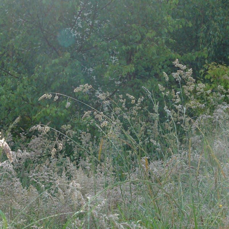 Close-up en detail op lang gras in een wilde tuin stock afbeelding