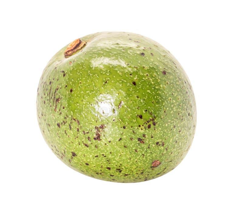 Close-up Enig van groene Thaise avocado op witte achtergrond royalty-vrije stock afbeelding