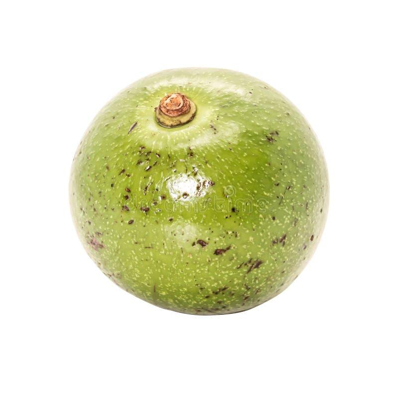 Close-up Enig van groene Thaise avocado op witte achtergrond stock afbeeldingen