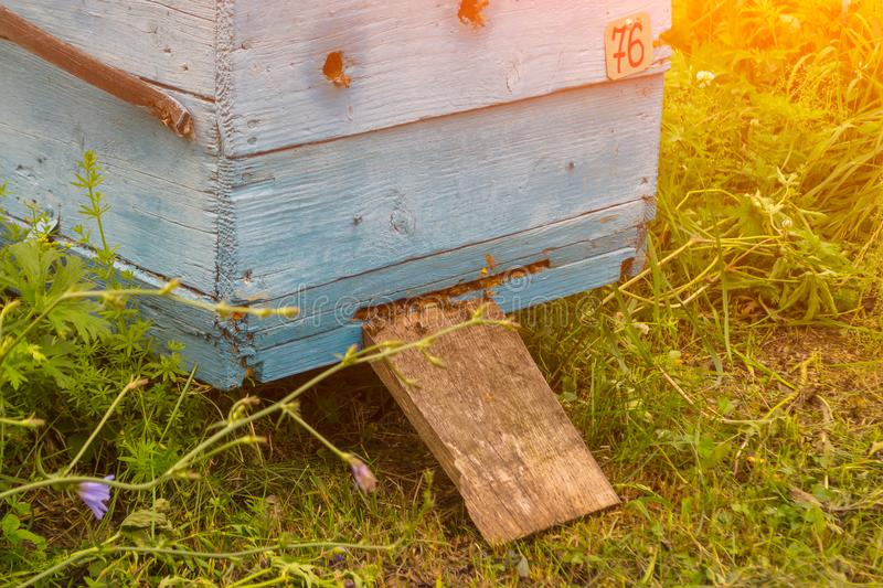Close-up of the entrance to a large blue hive from a wood in the royalty free stock photography