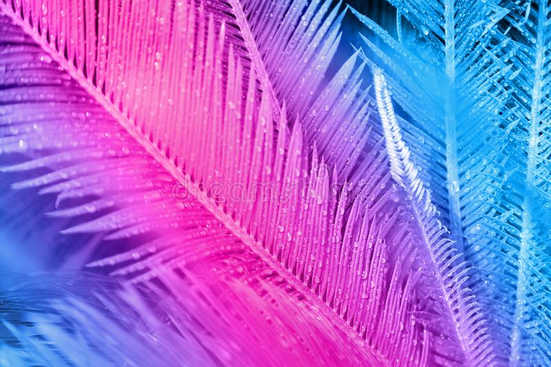 Close up of exotic tropical leaves colored in neon colour royalty free stock photos