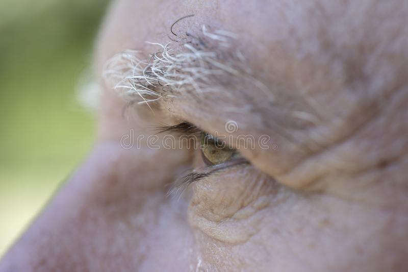 Closeup eye of caucasian old man. Portrait of old man outdoors. Caucasian male face background, close up eyes, macro royalty free stock images