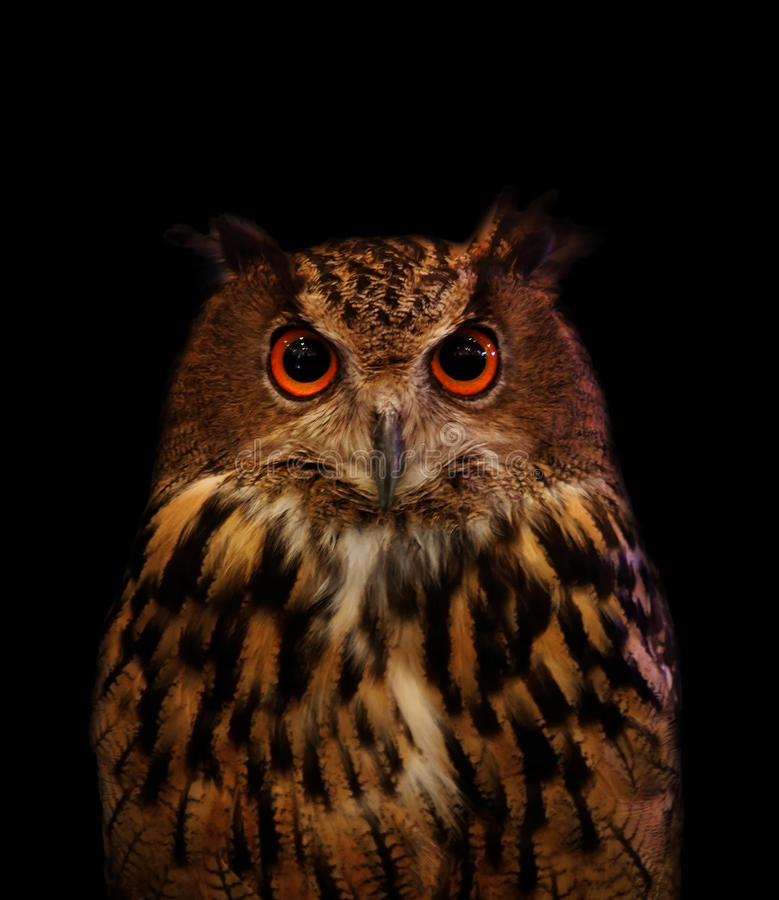Close up face of owl on black. Use for multipurpose stock photo