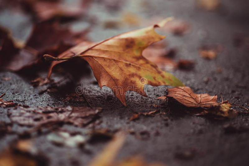 Autum colored leave on the ground royalty free stock photo